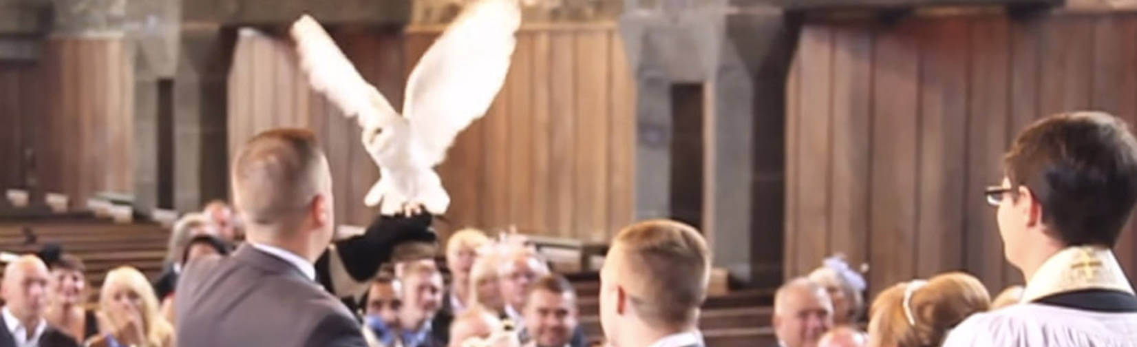This is not just ANY Owl Ring Bearer